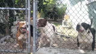 Pitbull kennels - Dog Fun Tube