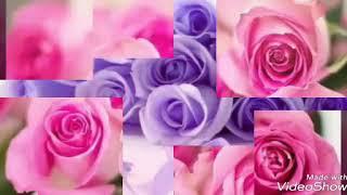 ภาพดอกกุหลาบที่สวยที่สุด