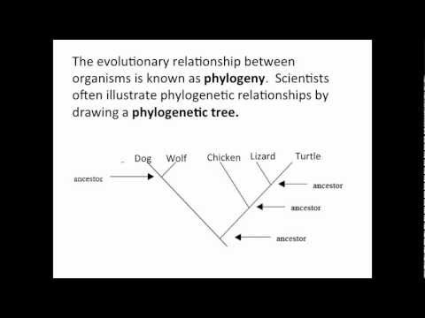 Phylogenetic Trees Youtube