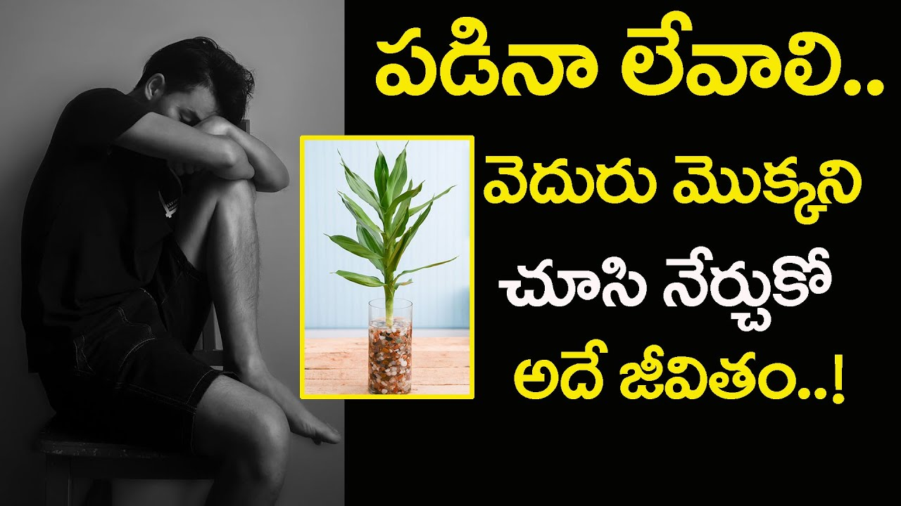 A Motivation Story Of Bamboo Tree That Will Inspire Our Life