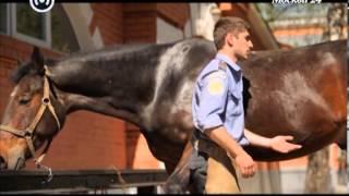 """""""Познавательный фильм"""": московская конная полиция"""