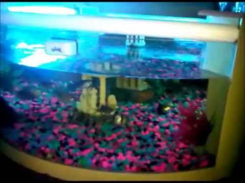 new update to my first aquarium coffee table fish tank (freshwater