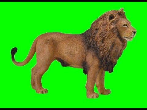 Lion Walk Animated | Free Green Screen Animations