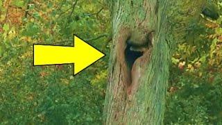 سمعوا صوت يأتي من هذه الشجرة !! أنظر ماذا وجدوا في داخلها ؟