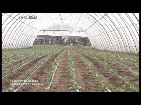 Celer - proizvodnja rasada i kako da ga imate preko cele godine