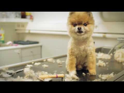 """BOO"" The Dog [transforming]"