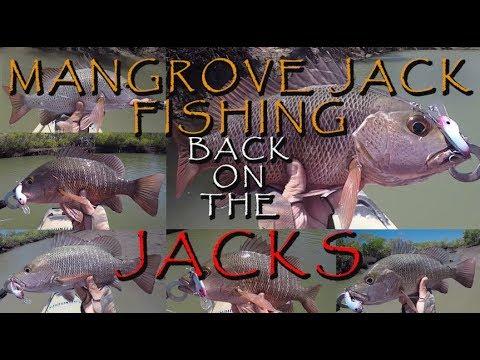 AWESOME MANGROVE JACK FISHING, BACK ON THE JACKS