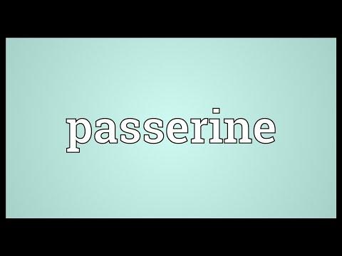 Passerine Meaning