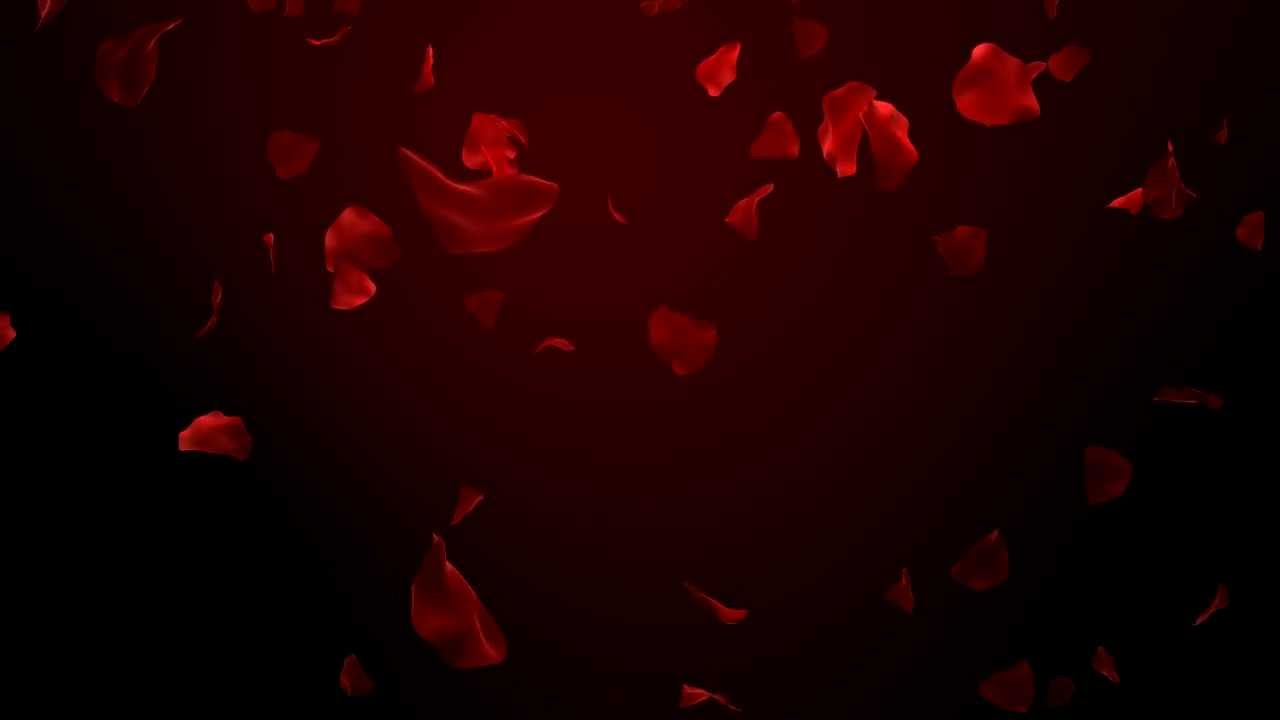 Rose Petals Falling Wallpaper Transparent Gif Red Rose Petals Fall Mov Youtube