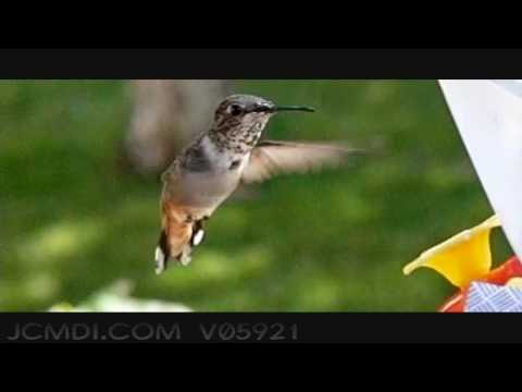 600fps Slow Motion Hummingbird Feeding Closeup. Upscaled to 720pHD