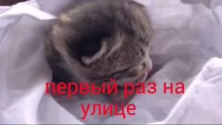 Котенок ростет. 4 месяца за 3 минуты.