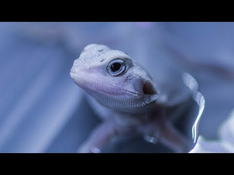 Unboxing A Bearded Dragon & Bearded Dragon Care : Reptile Room 2019 - Bubba's Living Emporium