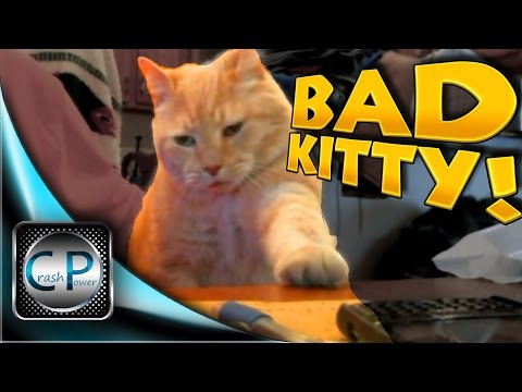 BAD KITTY! Trying To Work With My Cat Albert