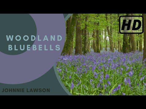 1 Hour Nature Sounds Relaxation-Bluebell Woods Birdsong Relaxing Meditation Forest Sounds