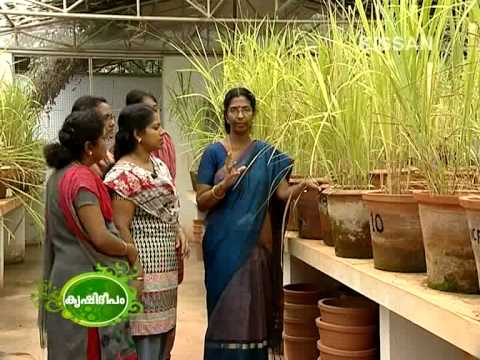 Feature story of Microbial inoculant technology, College of Agriculture, Vellayani