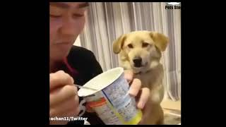 Cute pets & Funny Animals compilation#5