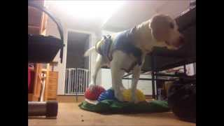 Canine Core Strength - Balance Board And Paw Pods