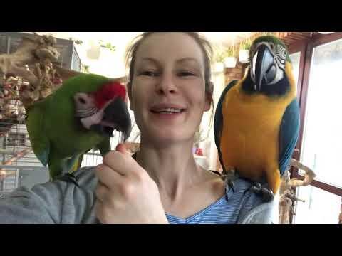 Wychowywanie Papug. Papuga Dobrze Wychowana, Czyli Jaka?, Kiedy Papuga Jest Spokojna.