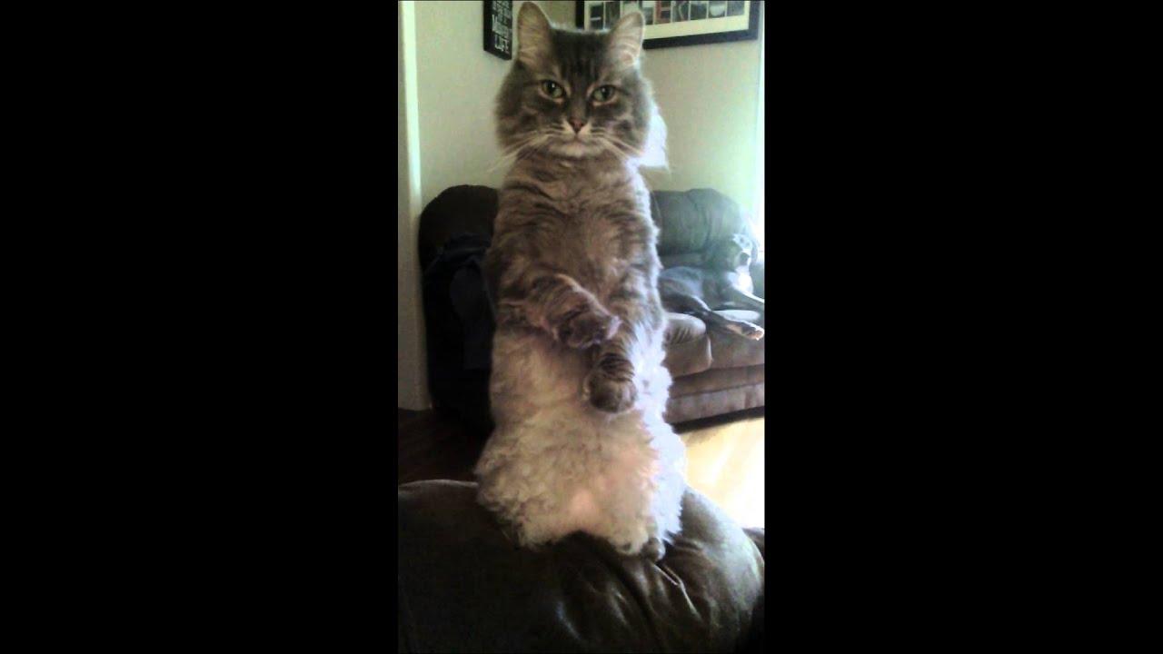 Youtube Cat Eye Tutorial: Crazy Cat
