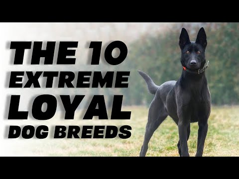 The 10 Extreme Loyal Dog Breeds