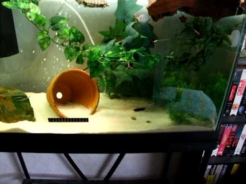 Proper Turtle Tank : Squirt The Red Ear Slider Turtle - Tank Set-Up - YouTube