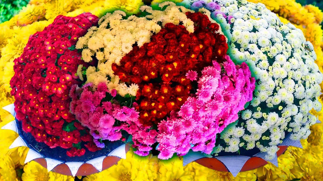 ХРИЗАНТЕМА: уход осенью! Зимовка Хризантемы. Как вырастить сногсшибательную Хризантему МУЛЬТИФЛОРА