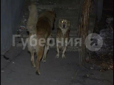Двое неизвестных напали на хабаровчанку в подъезде и украли собаку. Mestoprotv