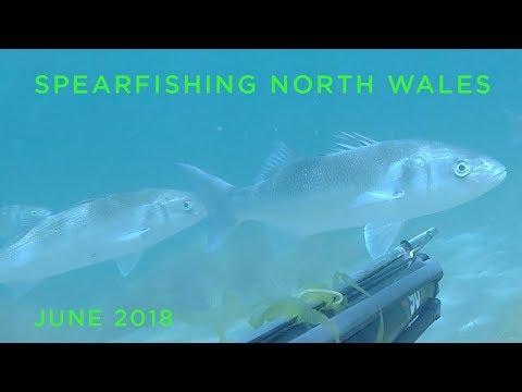 Spearfishing North Wales | Late June 2018 | Bass & Garfish