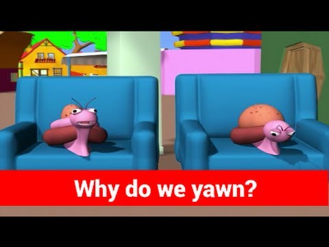 Question and Answers - Why Do I Yawn - Tell Me Why - Kids Most Asked Why
