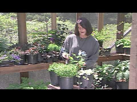 Gardening With Summer Perennials