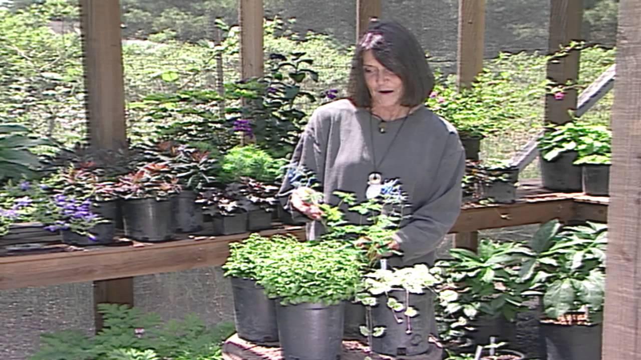 Gardening With Summer Perennials Youtube