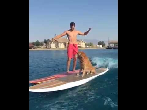 Dog Surfs with Owner