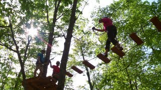 Tree Top Trekking