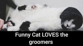 Hilarious CAT has a fetish for the blow dryer and it will make you LAUGH!