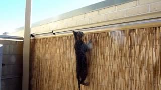 ミッション・インポッシブル!猫を傷つけずフェンスからの脱出を阻止できる海外の最新アイテムが画期的