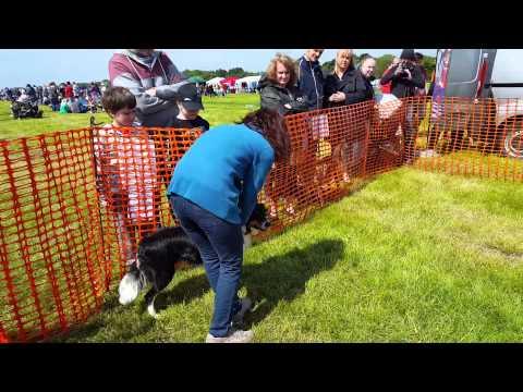 Fonmon Dog Show