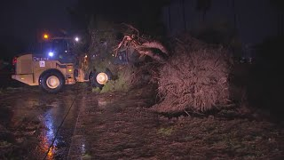 Trees down in the Scottsdale area following the storm