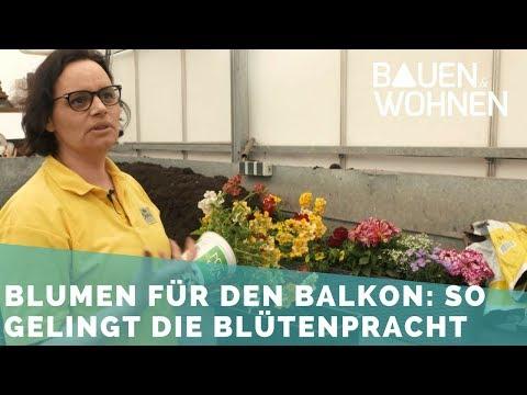 Balkonpflanzen – pflegeleichte Sorten pflanzen, pflegen, düngen