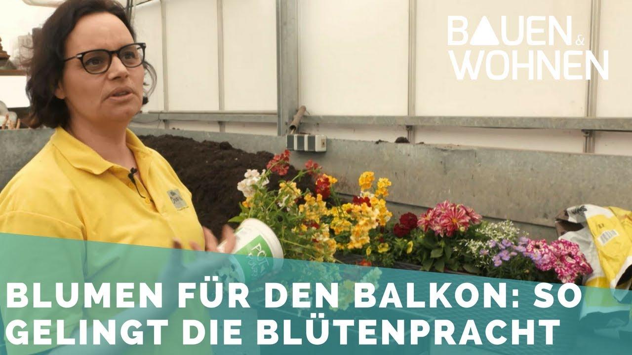Balkonpflanzen pflegeleichte sorten pflanzen pflegen for Pflegeleichte balkonpflanzen
