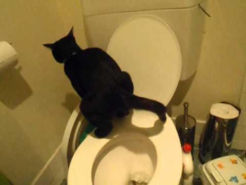 how to help a kitten poop