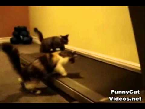 Funniest Cats In The Universe