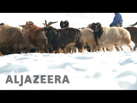 Mongolia herders hit by extreme weather