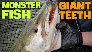 MONSTER FISH With GIANT TEETH SWALLOWS Lure!!!