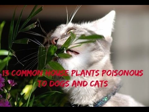 13 Common House Plants Poisonous to Dogs and Cats - YouTube