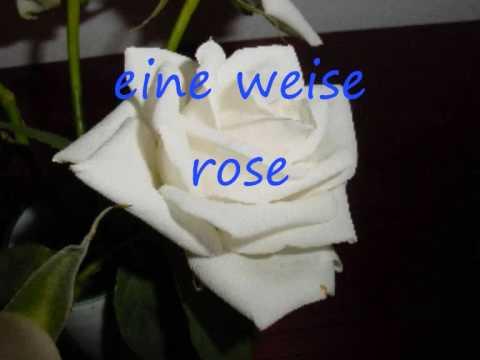 kastelruther spatzen eine weise rose