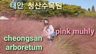 태안 청산수목원(pink muhly grass)sout…