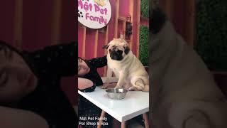 Đố ai không thích được - dàn cún con của Mật Pet đốn tim cộng đồng mạng .Dogs So Cute