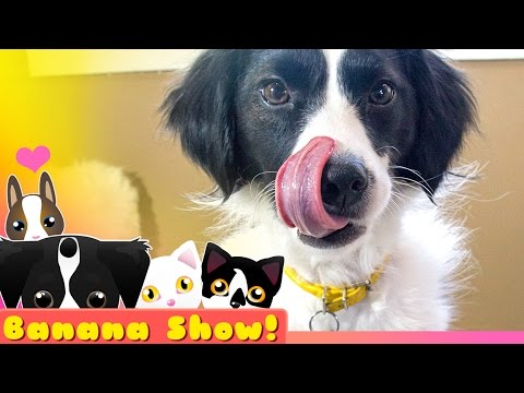 PET TREATER Unboxing | Get a FREE Dog Bed | Banana the Talking Dog Show Ep: 08