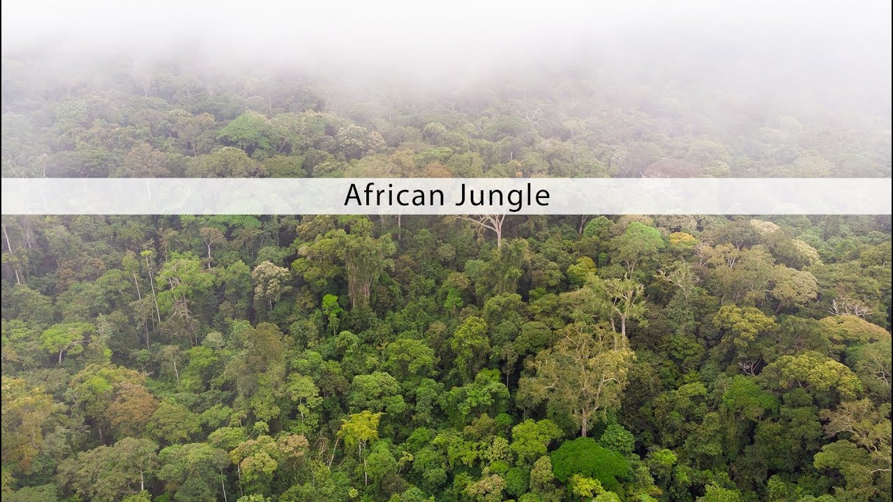 African Jungle sound effects library — Mindful Audio