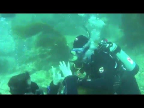 Aquanautics Dive: Santa Cruz Island